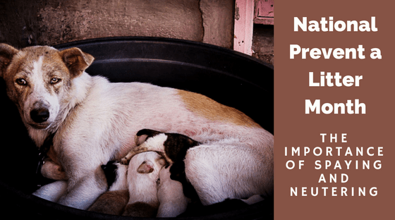 National Prevent a Litter Month: The Importance of Spaying and Neutering