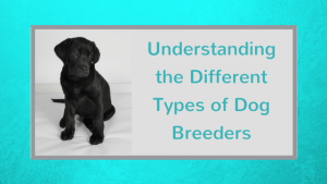 Different Types of Dog Breeders