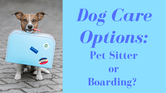 Dog Care Options: Pet Sitter or Boarding?