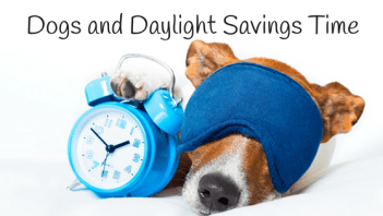 Dogs and Daylight Savings Time
