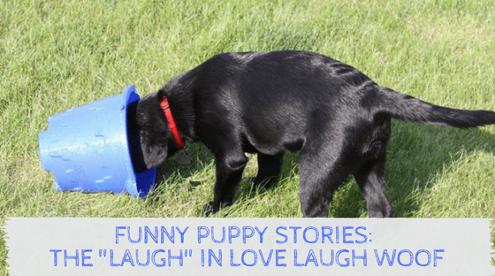 Funny Puppy Stories, the Laugh in Love Laugh Woof