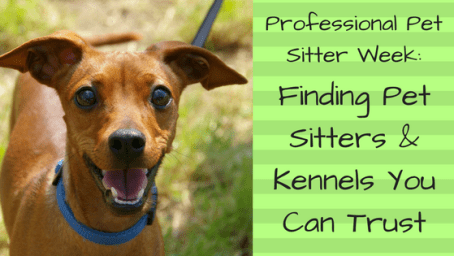 Professional Pet Sitter Week: Finding Pet Sitters & Kennels You Can Trust