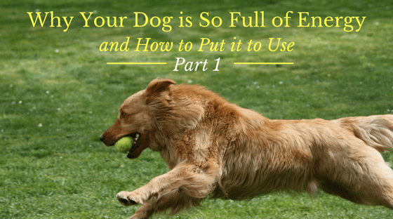 Why Your Dog is So Full of Energy