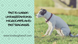 Pet ID Week Understanding Microchips and Pet Trackers