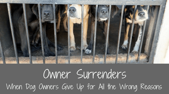 Owner Surrenders: When Dog Owners Give Up for All the Wrong Reasons