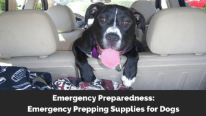 Emergency Preparedness: Emergency Prepping Supplies for Dogs