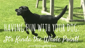 Having Fun with your dog, It's Kinda the Whole Point