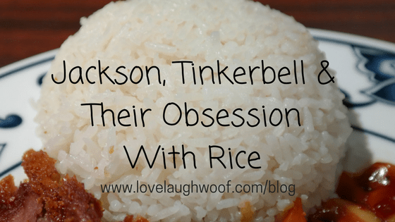Jackson, Tinkerbell & Their Obsession with Rice