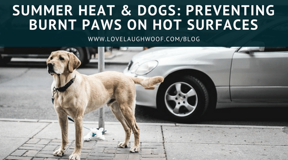 Summer Heat & Dogs: Preventing Burnt Paws on Hot Surfaces