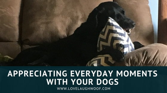 Appreciating Everyday Moments with Your Dogs