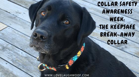 Collar Safety Awareness Week: The KeepSafe Break-Away Collar