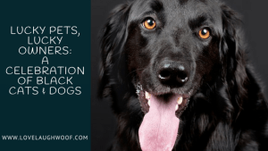 Lucky Pets, Lucky Owners: A Celebration of Black Cats & Dogs