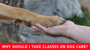 Why Should I Take Classes on Dog Care?