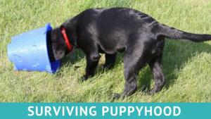 Surviving Puppyhood