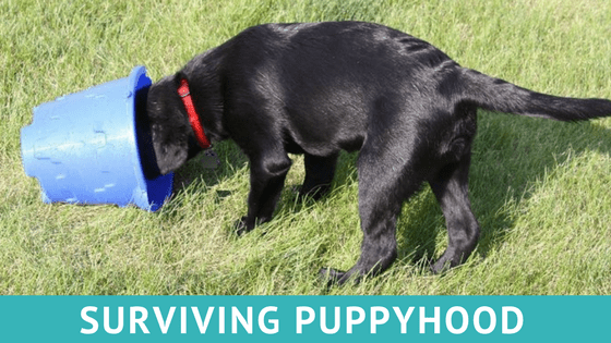 Surviving Puppyhood