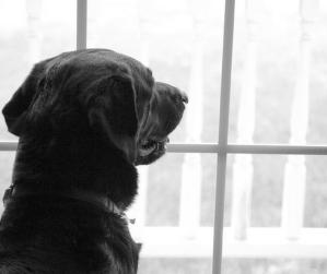 Love Laugh Woof dog owner workshops