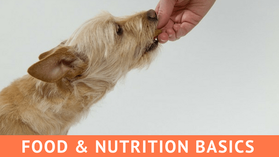 food and nutrition basics