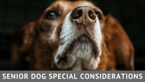 senior dog workshop