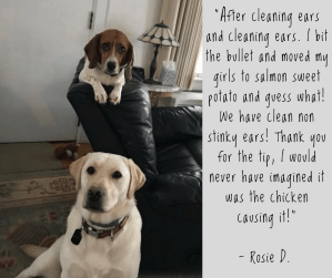 Rosie Testimonial Love Laugh Woof