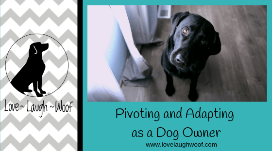 Pivoting and Adapting as a Dog Owner