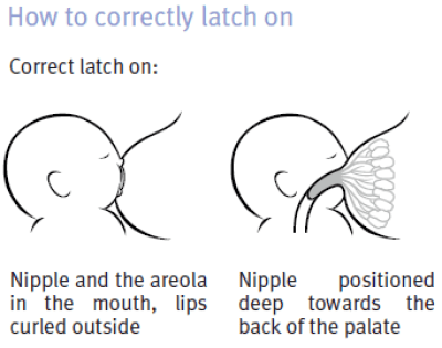 latching-how-to-correctly-latch-on
