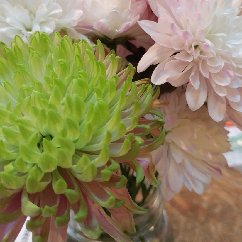 Green and Pink Dahlia Unwifedmotherexpletive