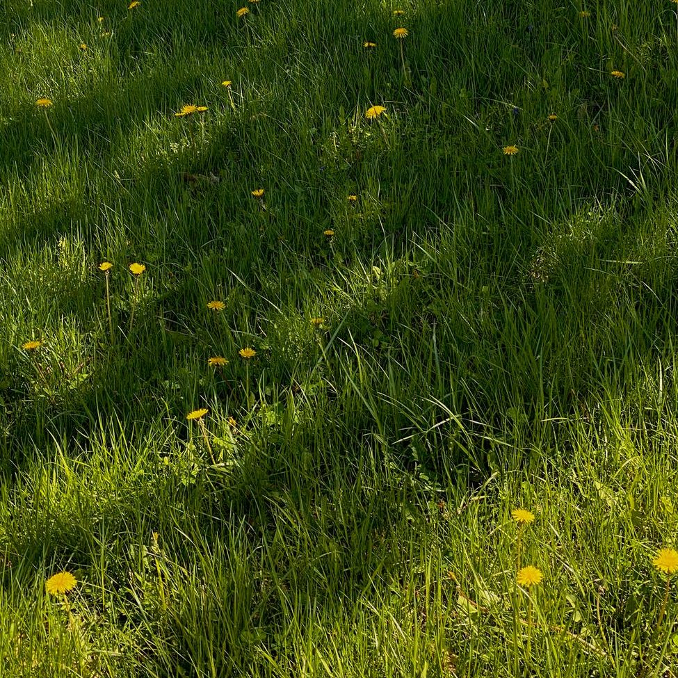 grassy meadow with flowers in nature