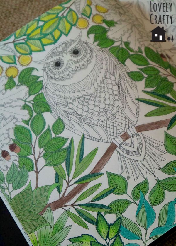 Owl and Leaves 1