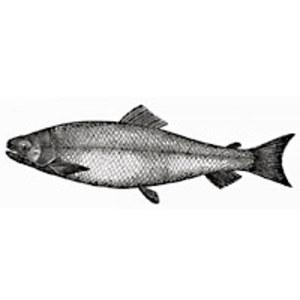 Seafood Potpie