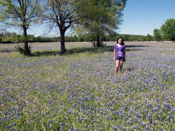 Texas Bluebonnets 2017