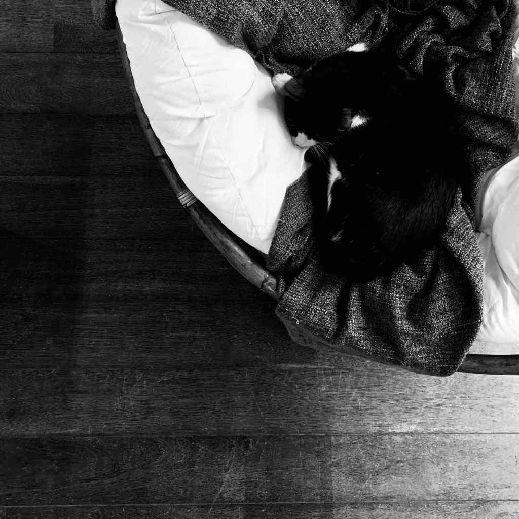 1er janvier 2019 - Photographie en noir et blanc. Chat qui dort sur un fauteuil.