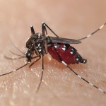 What is Zika Virus Full Details on Zika Virus in Hindi Reason and Symptoms of Zika Virus