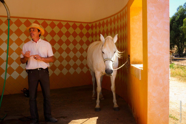 Picadeiro do Naturarte Campo Turismo Rural