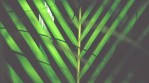Palm Sunday Reflection