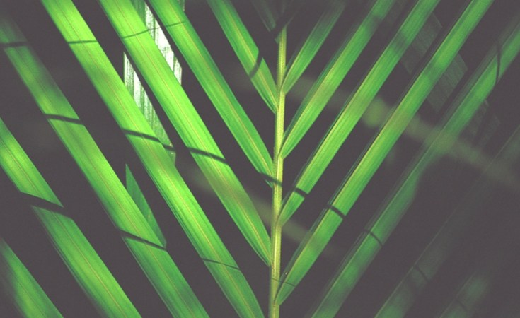Palm Sunday Reflection