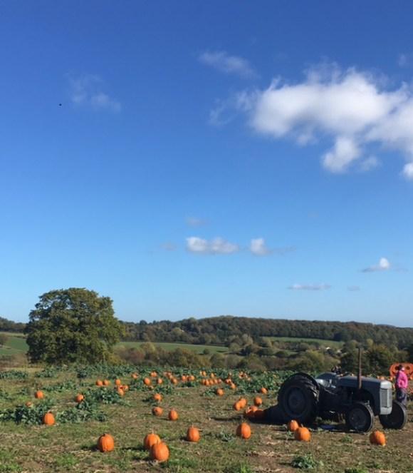 autumn in Derbyshire Village Pumpkins pumpkin patch - bright blue sky with tractor in foreground