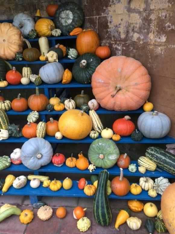 autumn in Derbyshire multicoloured pumpkins at Calke Abbey