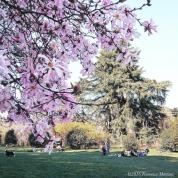 Parco Sempione in fiore