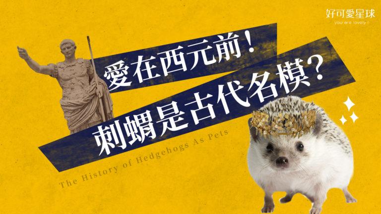 刺蝟怎麼變成寵物的?愛在西元前就開始!