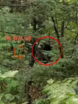 What to do if you encounter bears while camping