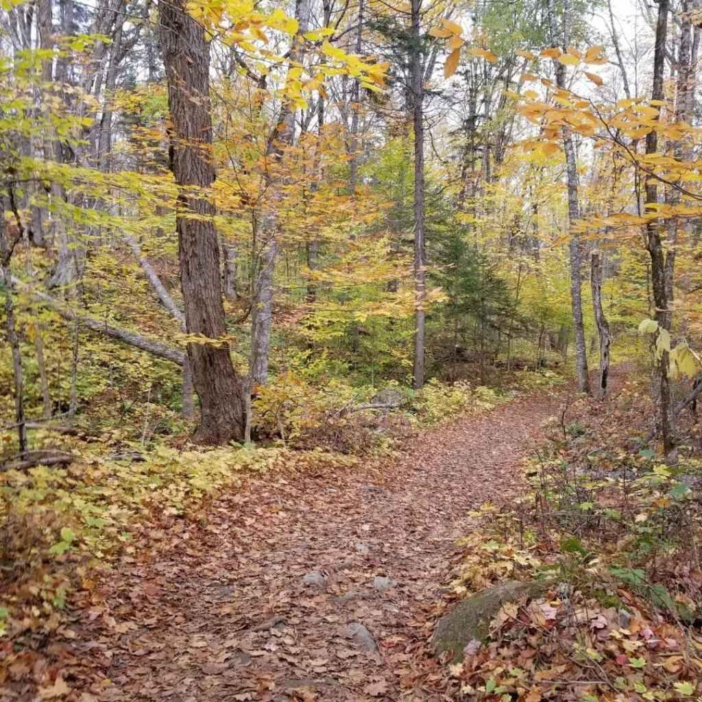 Path to Moxie Falls