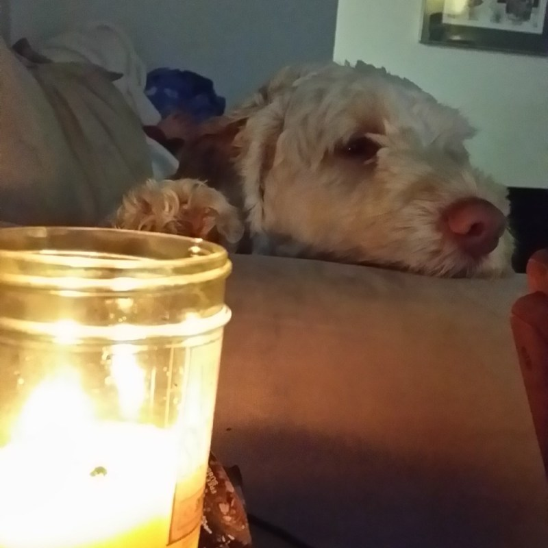 Puppy by candlelight.