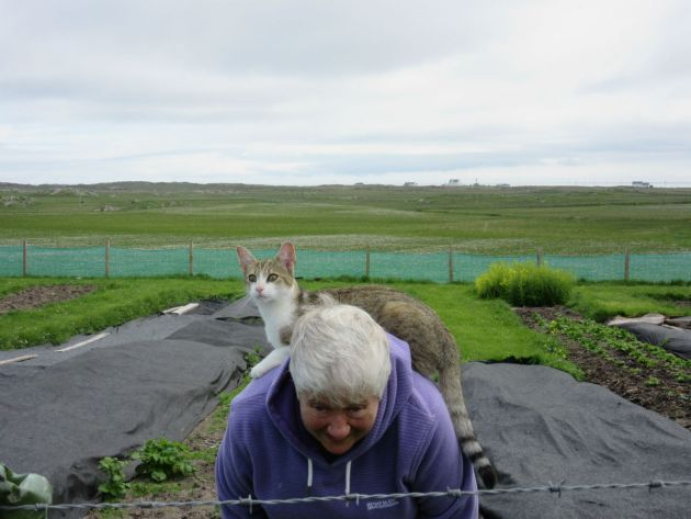 One of Rhoda's cats helping Shirley with the gardening