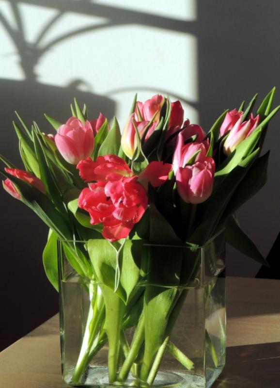 Tulipaner og skyggespil