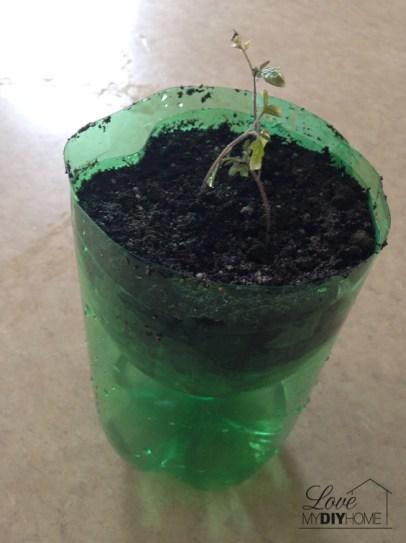 Pop bottle planter | Love My DIY Home