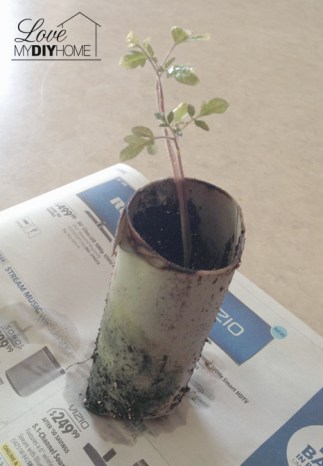 T'paper roll planter | Love My DIY Home