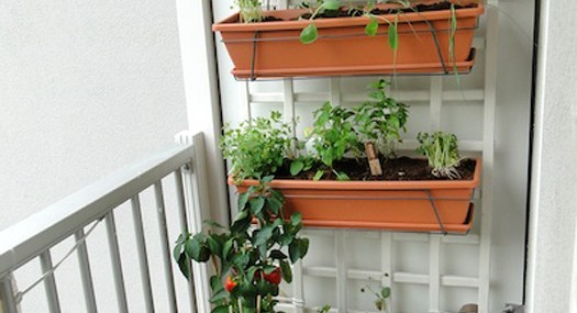 Building a Balcony Garden – Guest Post by Dane O'Leary