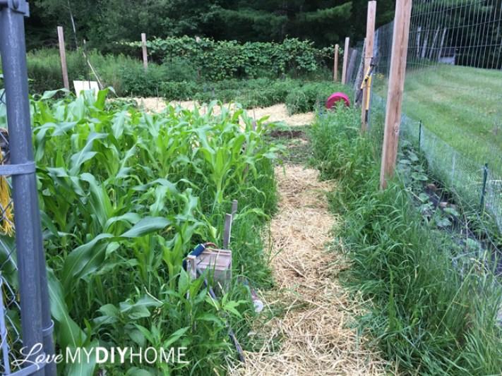 Using Straw for Mulch {Love My DIY Home}