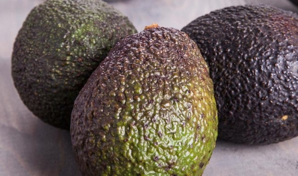 Organic vs Traditionally Grown Avocados Love One Today