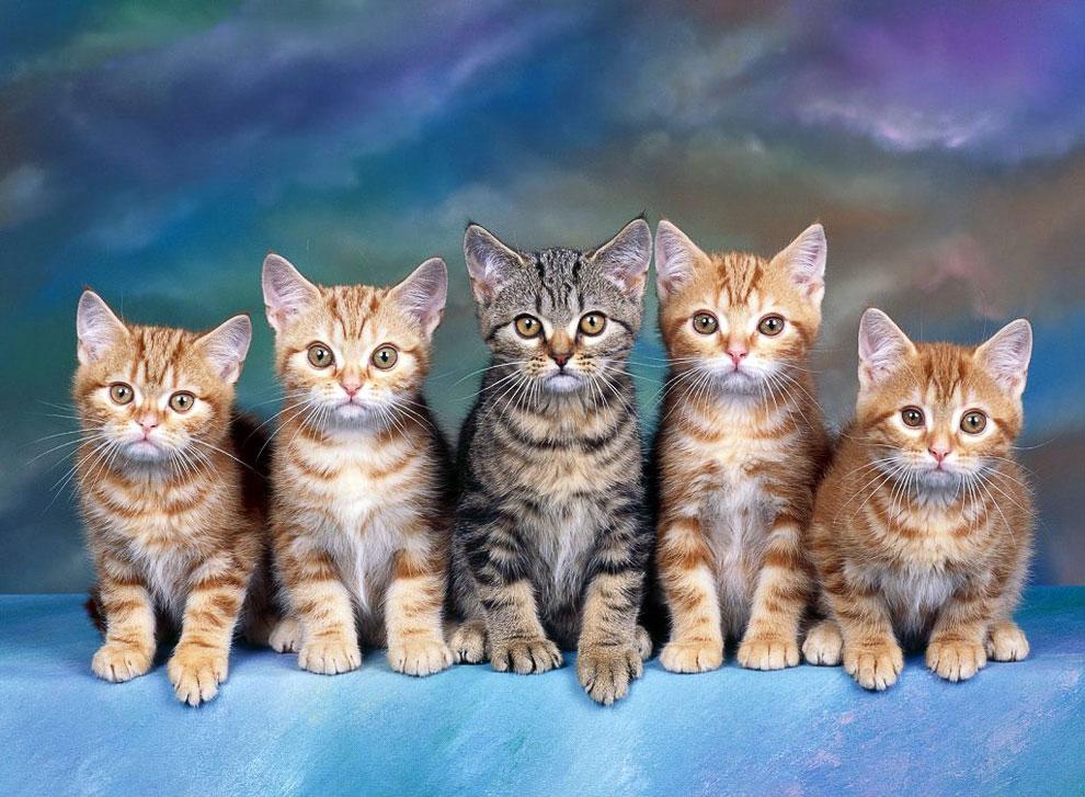 Известные люди о кошках